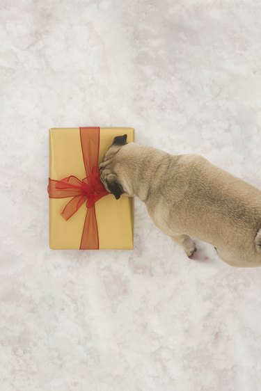 Christmas present discovered in the snow