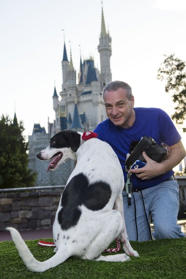 101 Dogs Visit Walt Disney World For Animal Planet TV Special