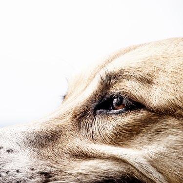 dog face, detail, close-up