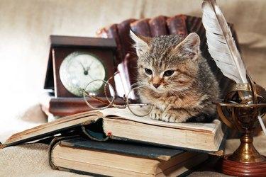 Scientist Kitten