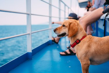 Dog traveling on the ferry