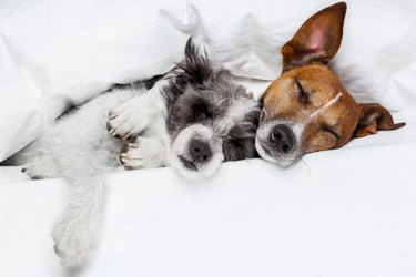 two dogs in love