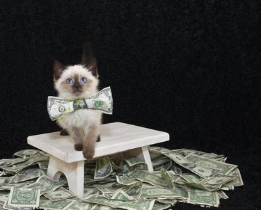 20 Times You Wated Money On Your Cat