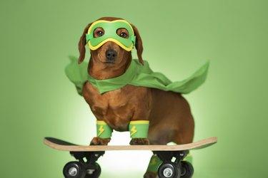 Masked superhero dog on a skateboard