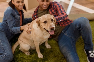 happy african american couple with labrador dog moving to new home