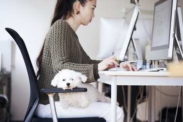 business woman working at office with dog