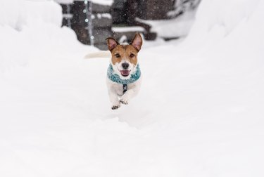 Happy funny dog running on snow path on winter day
