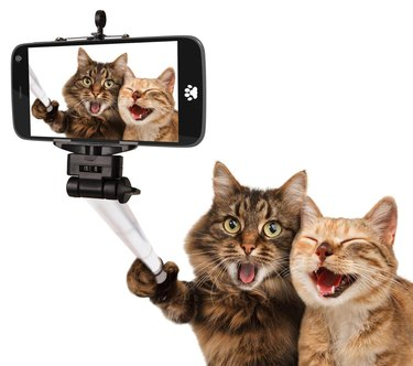 Cat Taking Selfie With Smart Phone Against White Background