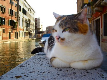 calico cat on stone wall beside Venice canal