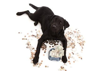 black dog surrounded by money