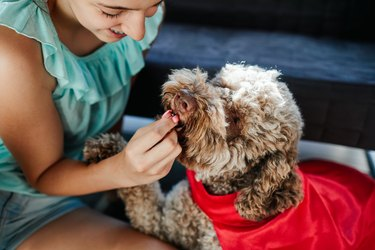 young woman giving cute fluffy dog a treat