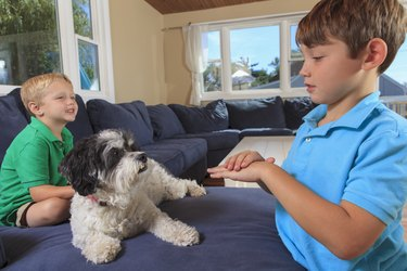 Boys with hearing impairments signing pet in American sign language on their couch