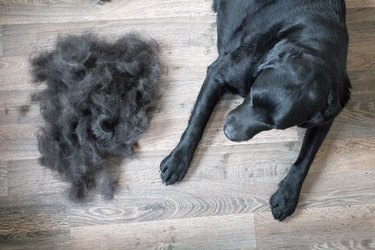 Dog and Its Fur