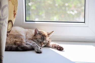 cute domestic cat resting on a window sill. sunny day