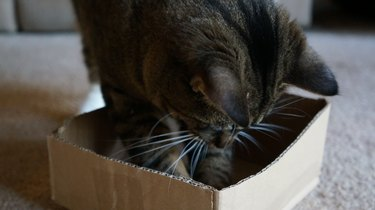 Cat With Paws in Box