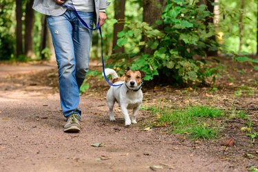 Man and dog on loose leash hiking at forest by footpath