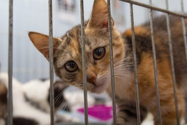 Red kitten in a cage at the shelter