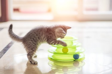kitten play with a cat toy
