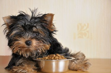 A small puppy sitting by a bowl of food