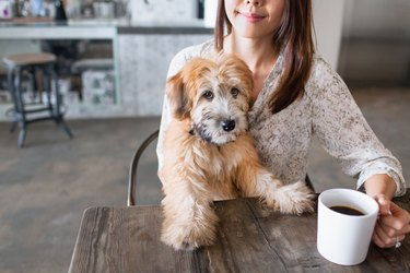 Portrait of puppy sitting on female owners knee at kitchen table