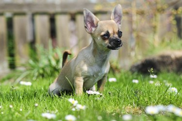 Pipi on the grass