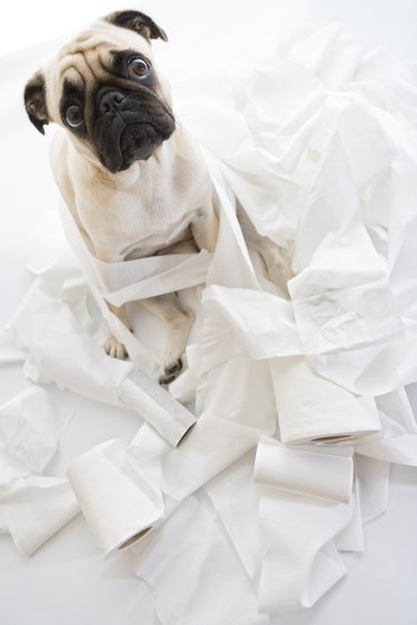 Puk Pukster Is in Trouble Again with Toilet Paper