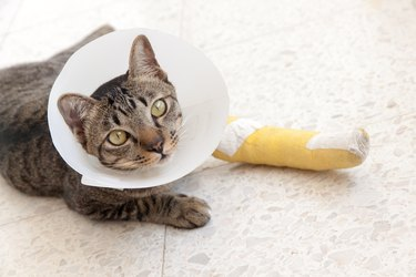 broken leg splint cat