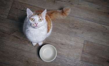 Cute tabby cat looking to the camera and waiting for food. High angle view with copy space.