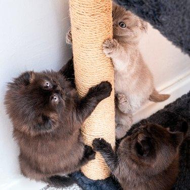 Climbing Race to cat house Between the Brotherhood