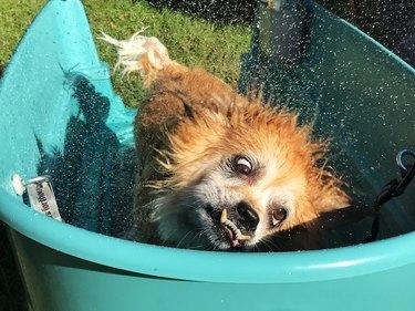 Close-Up Of Dog Having A Bath