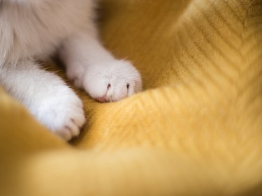 Bright white cat paws. Sleeping on yellow background, copy space.