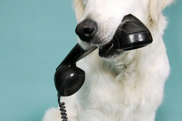 dog with old fashioned phone in mouth