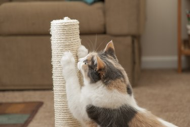 cat scratching on scratching post