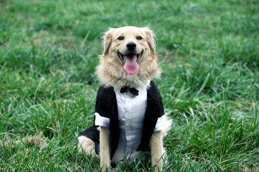 happy groom dog