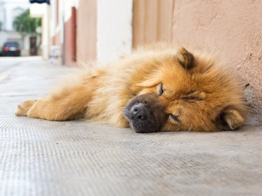 Portrait of dog sleeping in summer to the shade on a sidewalk of the street.