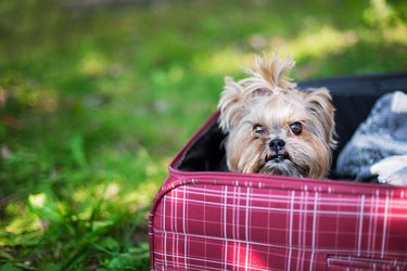 Close-Up Portrait Of Dog Sitting In Suitcase