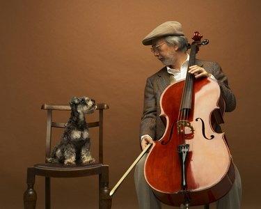Miniature Schnauzer And Senior Man With Cello