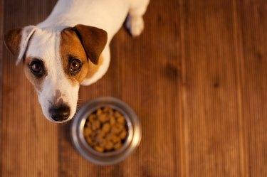 Dog next to food bowl looking up at camera