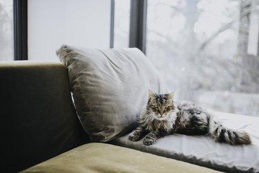 Cat lying beside a window