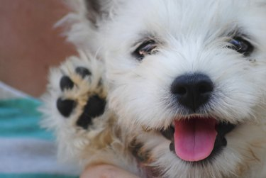 Smilling Puppy