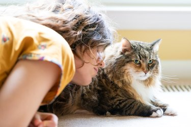One young woman, female owner, person sitting, lying by maine coon cat on carpet floor, bonding, touching face, hair, petting, friends, friendship, companion by bright light window