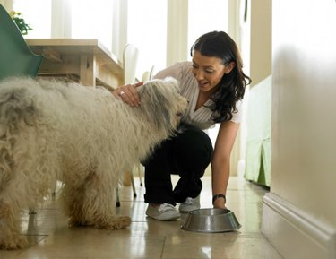 Fluffy white dog with woman putting a dog bowl on the floor.