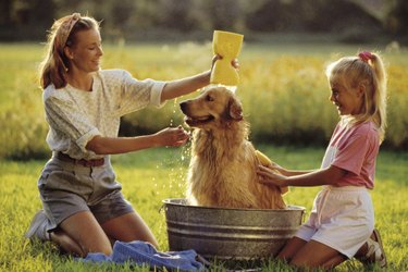 Two girls washing a dog outside in a metal washtub