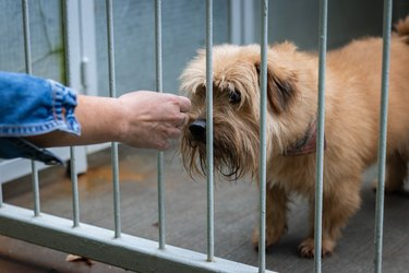 Abandoned dog in animal shelter. Hope for pet adoption. Female hand touching a dog in cage.