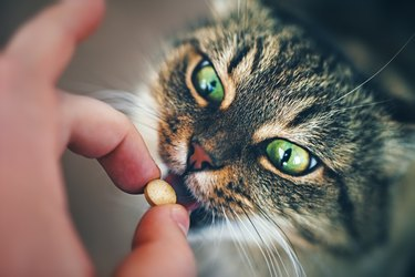 Cat takes a Pill