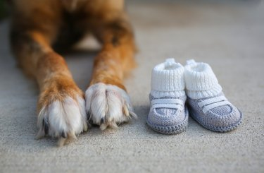 Dog Paws and Baby Shoes