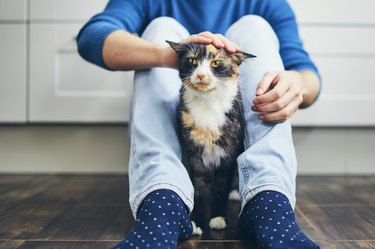 Low Section Of Man With Cat Sitting On Floor
