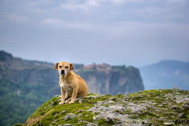 Dog on the cliff