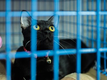 Lonely cat in cage