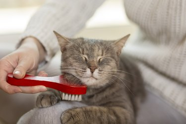 person brushing a cat's chin with a red brush